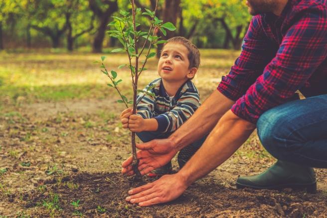 Baum pflanzen